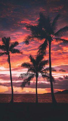 New Palm Tree Sunset Wallpaper Sun Ideas Tree Sunset Wallpaper, Beach Wallpaper, Nature Wallpaper, Wallpaper Backgrounds, Iphone Backgrounds, Paradise Wallpaper, Wallpaper Quotes, Mobile Wallpaper, Summer Sunset