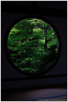 Dark green vegetation in Genko-an temple 源光庵, Kyoto, Japan by Damien Douxchamps