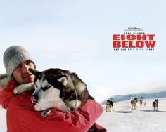 Paul Walker Eight Below | Eight Below : Bộ phim cảm động tưởng nhớ về Paul Walker