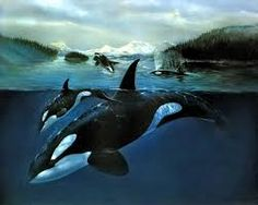 orcawhales - Google Search