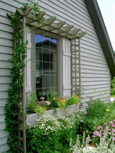 A mini pergola for around the window, a beautiful architectural support for training clematis or climbing roses.