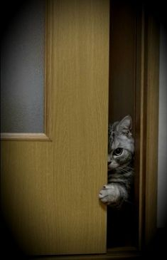 Peekaboo come find me Funny Cats, Funny Animals, Cute Animals, Kittens Cutest, Cats And Kittens, Stupid Cat, Grey Cats, Cat Facts, Beautiful Cats