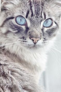 Check this out >> Beautiful Small Cats Images #view