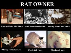 A Rat Owner by Rattie, via Flickr