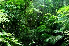 Taman Negara Park, Malaysia   The oldest rainforest on earth!