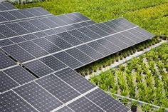 Photovoltaic Effect Solar City Viridian Solar City Solar Panels Solar Energy Facts