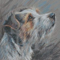 """""""Jack Russel Terrier"""" by Paul Doyle, well-known & prolific English canine artist Animal Paintings, Animal Drawings, Dog Drawings, Color Pencil Art, Pastel Art, Jack Russell Terrier, Dog Portraits, Dog Art, Pet Birds"""