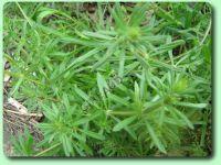 """Reconnaitre les """"mauvaises herbes"""""""