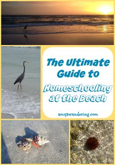 This Ultimate Guide to Homeschooling at the Beach is packed with lessons, experiments, worksheets, and activities.