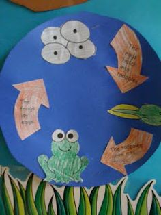 i was totally teaching this earlier today lol -frog life cycles First Grade Science, Kindergarten Science, Teaching Science, Science For Kids, Science Activities, Preschool Activities, Classroom Crafts, Science Classroom, Frog Facts