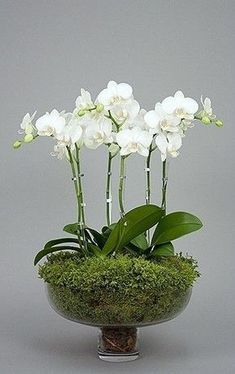 Send the perfect flowers from Muguet Florist. We offer the freshest and most beautiful flowers for Beverly Hills flower delivery. Ikebana, Orchid Flower Arrangements, Orchid Plants, Succulent Arrangements, Moth Orchid, Succulent Bouquet, Wedding Arrangements, All Flowers, White Flowers