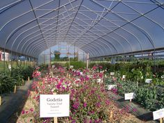 something beautiful in the works under this rimol high tunnel - Rimol Greenhouse Of Photos