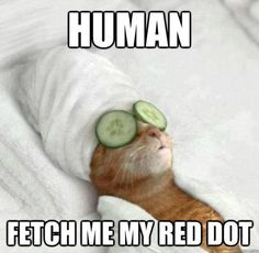 Great Pics of The Week: Cute & Funny Critters - Neatorama