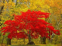Only-Nature: Beautiful Tree Wallpapers