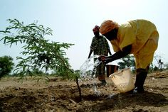 Climate-smart agriculture: Not just for big farms anymore by President Paul Kagame and Kanayo F. Nwanze http://ifad-un.blogspot.it/2012/04/climate-smart-agriculture-not-just-for.html