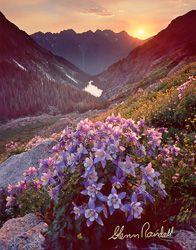 Ruby Basin Sunset, Weminuche Wilderness, Colorado, columbine, flowers, wildflowers, Ruby Basin, mountains, lakes