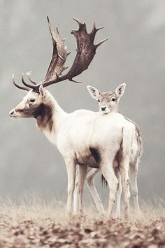 close knit deer