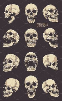 Anatomic Skulls Vector Pack Skulls # Pack # Anatomic - Anatomic Skulls Vector Pack Skulls # Pack # Anatomic You are in the right place about diy - Skull Reference, Art Reference Poses, Drawing Reference, Skeleton Drawings, Skeleton Art, Skeleton Love, Skull Anatomy, Anatomy Art, Skull Tattoo Design