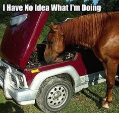 I have no idea what I'm doing! I'm a horse not a mechanic!