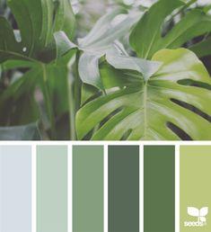 Color Naturecolor
