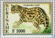 Margay. Kleine tijgerkat. Postzegel Suriname. 1995 WNF. Source and picture: www.catawiki.nl