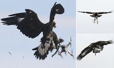 French police training EAGLES to attack drones