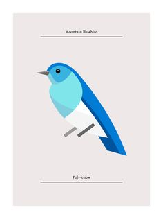 Mountain Bluebird, Flora and Fauna series, Birds edition - Josh Brill