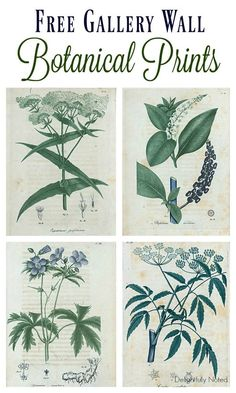 Free Botanical Art Prints. Great resource for a collection of botanical art that would be perfect for gallery walls.