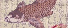 Koi are a legendary fish. Graceful, vibrant, and one of the most recognizable fish in the world, koi ...