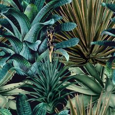 Lush Succulents Wallpaper from The Rediscovered Paradise collection by MINDTHEGAP is a botanical wallpaper with lush green foliage on black. Green Wallpaper, Modern Wallpaper, Designer Wallpaper, Amazing Wallpaper, Plant Wallpaper, Wallpaper Art, Wallpaper Backgrounds, Wallpaper Samples, Pattern Wallpaper