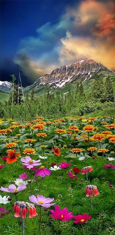 Mountains & Wildflowers - Beauty at All Levels.