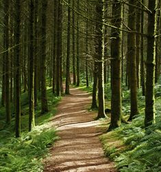 Beautiful forest path by Forest Trail, Forest Path, Beautiful Forest, Beautiful Places, Arran, Walk In The Woods, All Nature, Pathways, Beautiful Landscapes