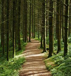Woods in Arran, Scotland