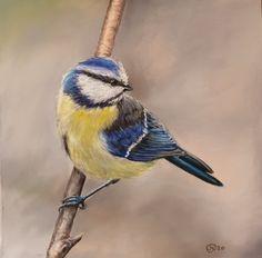 Bluetit by Julie Wilson Julie Wilson, Bird Paintings, Bird Drawings, Bird Art, Painting & Drawing, Pose, Birds, Artist, Animals
