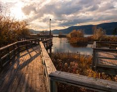 """""""I have my own views about Nature's methods though I feel that it is rather like a beetle giving his opinions upon the Milky Way."""" - Sherlock Holmes  _  Walking through the stunning wetlands along Okanagan Lake in Kelowna BC Canada.  _  The late Autumn sun is setting earlier each day. It feels like midnight by 5pm. Is it just me or does it make you want to curl up on the couch and watch a movie?  _  #canada  #britishcolumbia  #autumn"""
