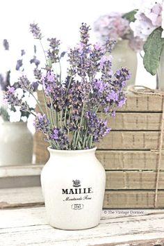 Lavender in pot Lavender Cottage, French Lavender, Lavender Blue, Lavender Fields, Lavender Flowers, Dried Flowers, Spanish Lavender, Purple Tulips, Malva