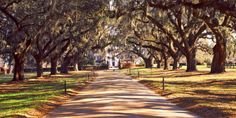 25 Photos That Prove Charleston, SC is the Most Charming City Ever Beautiful World, Beautiful Places, Amazing Places, Southern Plantation Homes, Tree Lined Driveway, Thing 1, Panoramic Images, Down South, Beautiful Architecture