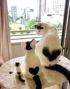 #animales #love #gatos #familia