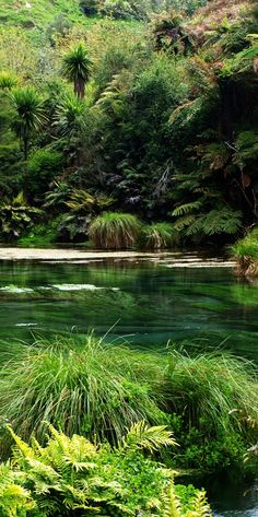 The Blue Waihou River - NZ