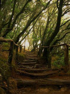 Path in Parque nacional de Garajonay, Canary Islands, Spain (by iwishuwerehere).