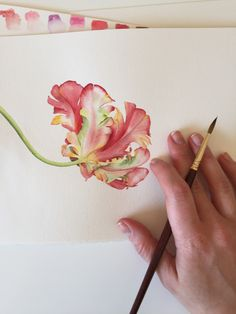 Watercolor Parrot tulip