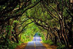 Red Road, Puna Coast Big Island of Hawaii
