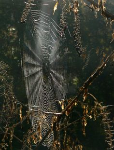 ~ Forest Weaver ~