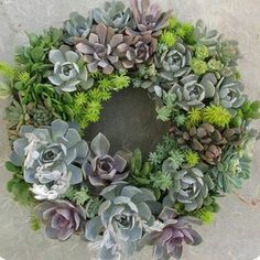 """Succulent wreath. Im unsure of who made this beauty. I think it may be Lisa from succulent create? Another great living decoration. Perfect for xmas"