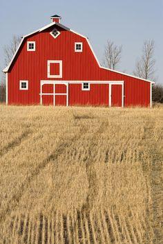 Wheat Fields And A Red Barn - Saskatchewan, Canada