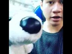 5 Seconds Of Summer - Instagram Video - The reason I eat biscuits in the morning