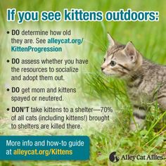 Strays & feral cats tips from our friends at Alley cat allies! Raising Kittens, Cats And Kittens, Kitty Cats, Cats Meowing, Cats Bus, Tabby Cats, Cat Care Tips, Pet Care, Pet Tips
