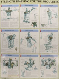 Strength Training Anatomy Poster Series: 9780736059312: Medicine & Health Science Books @ Amazon.com