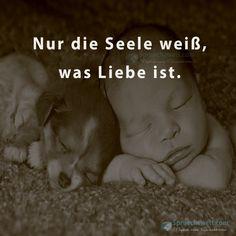 """""""Nur die Seele weiß, was Liebe ist."""" #Sprüche #Seele #Liebe von: spruechewelt.com"""