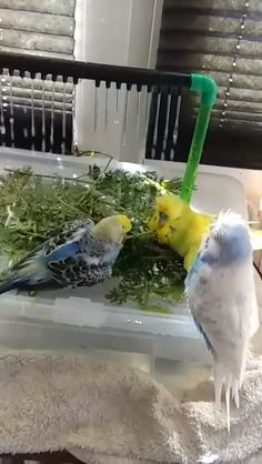 Birds enjoying shower Source by animals Funny Birds, Cute Funny Animals, Cute Cats, Beautiful Birds, Animals Beautiful, Beautiful Things, Animals And Pets, Baby Animals, Animals Crossing